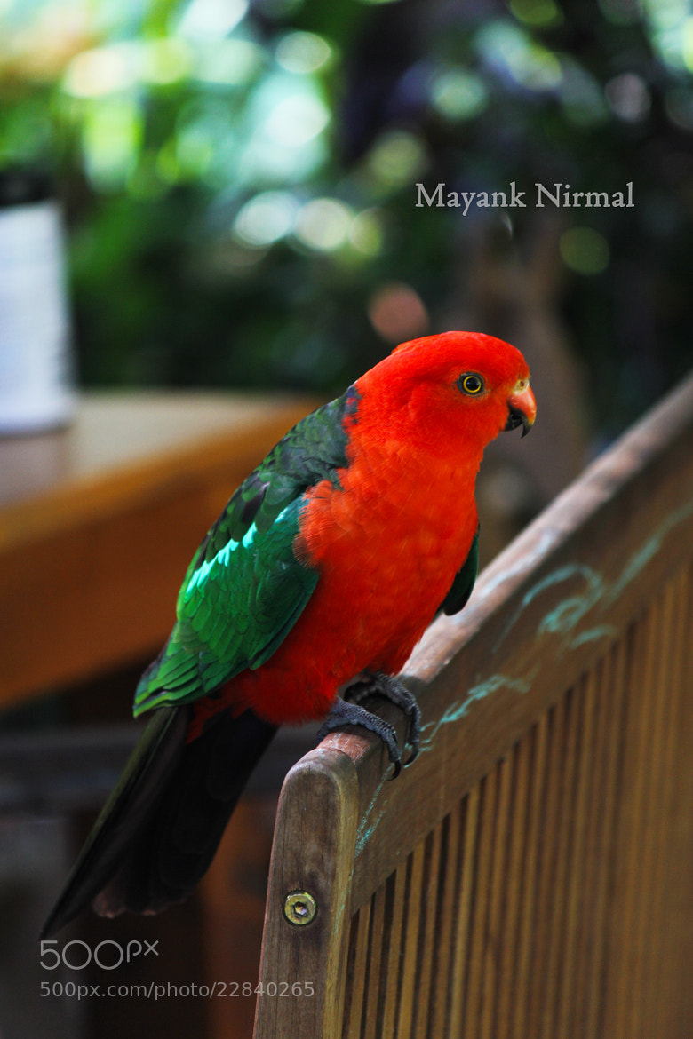 Photograph Untitled by Mayank Nirmal on 500px