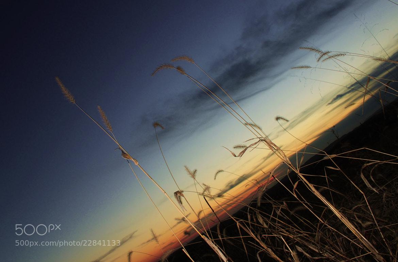 Photograph Silhouette sunset by Steve Jurell on 500px
