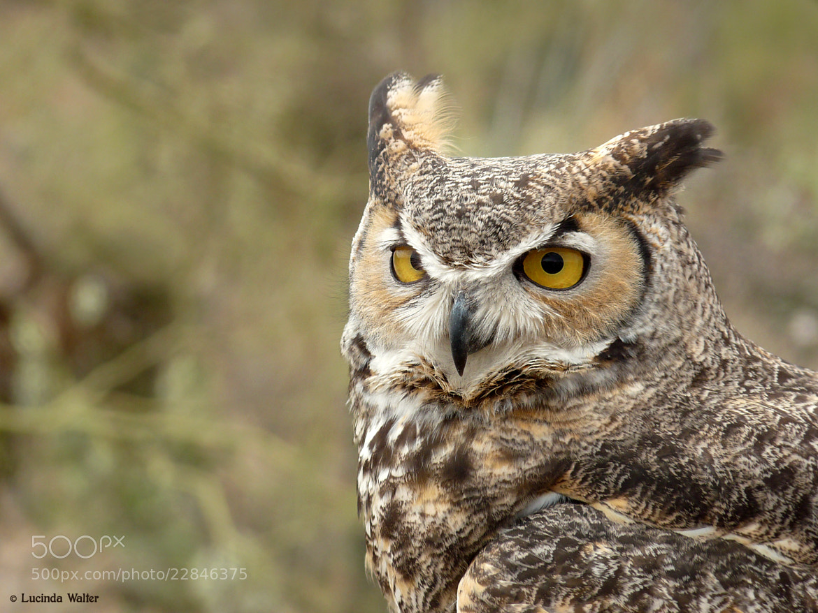 Photograph The Owl by Lucinda Walter on 500px