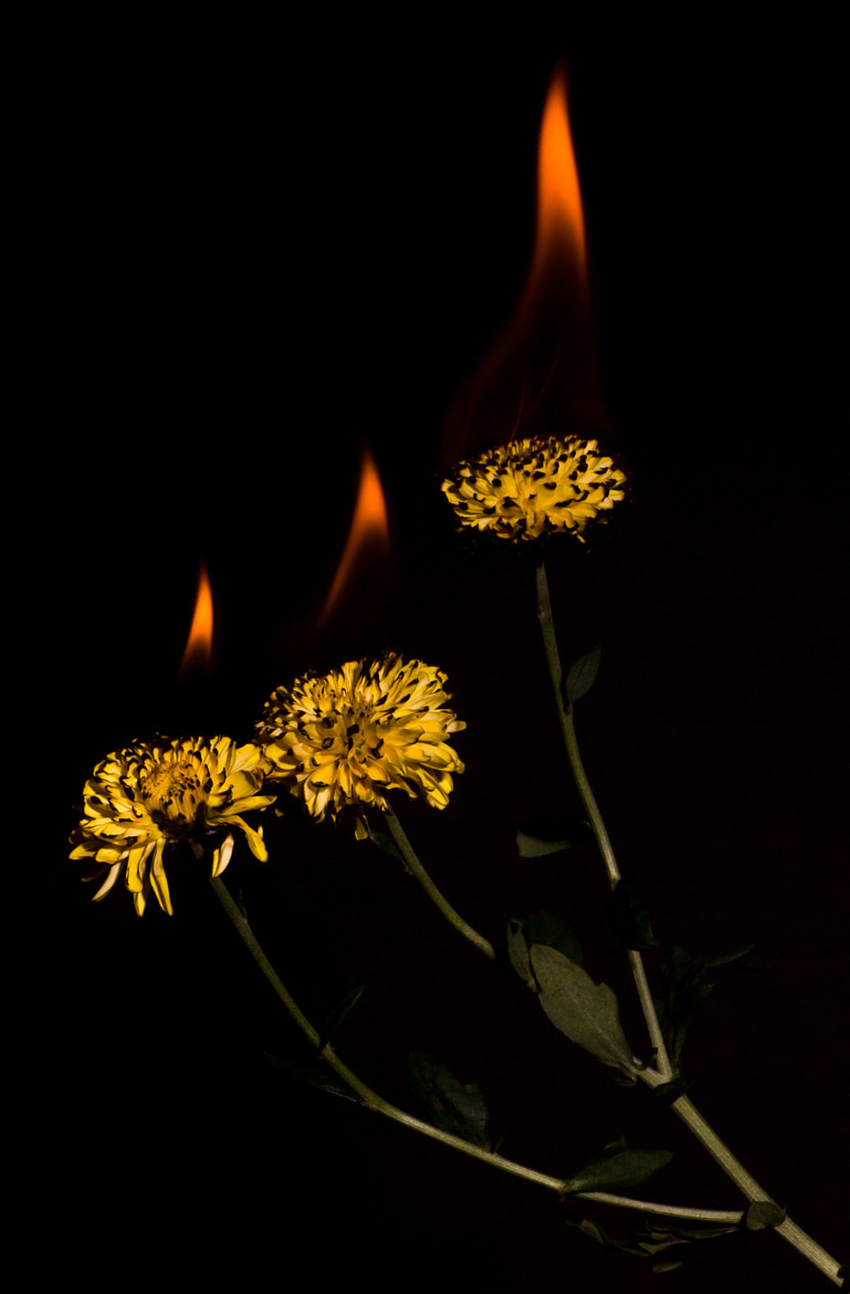 Photograph Candles by Stanley Azzopardi on 500px
