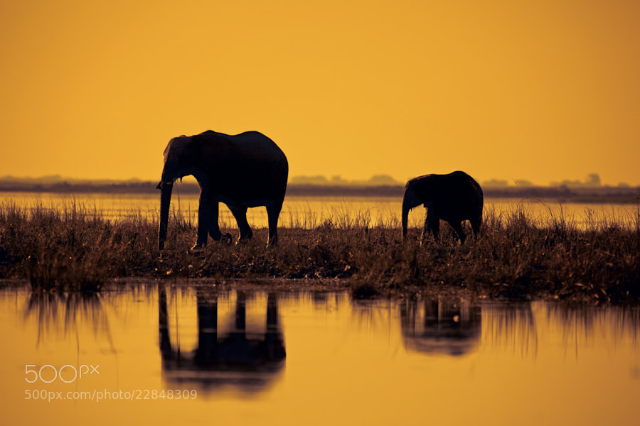 Photograph Sunset Reflections of Chobe by Mario Moreno on 500px