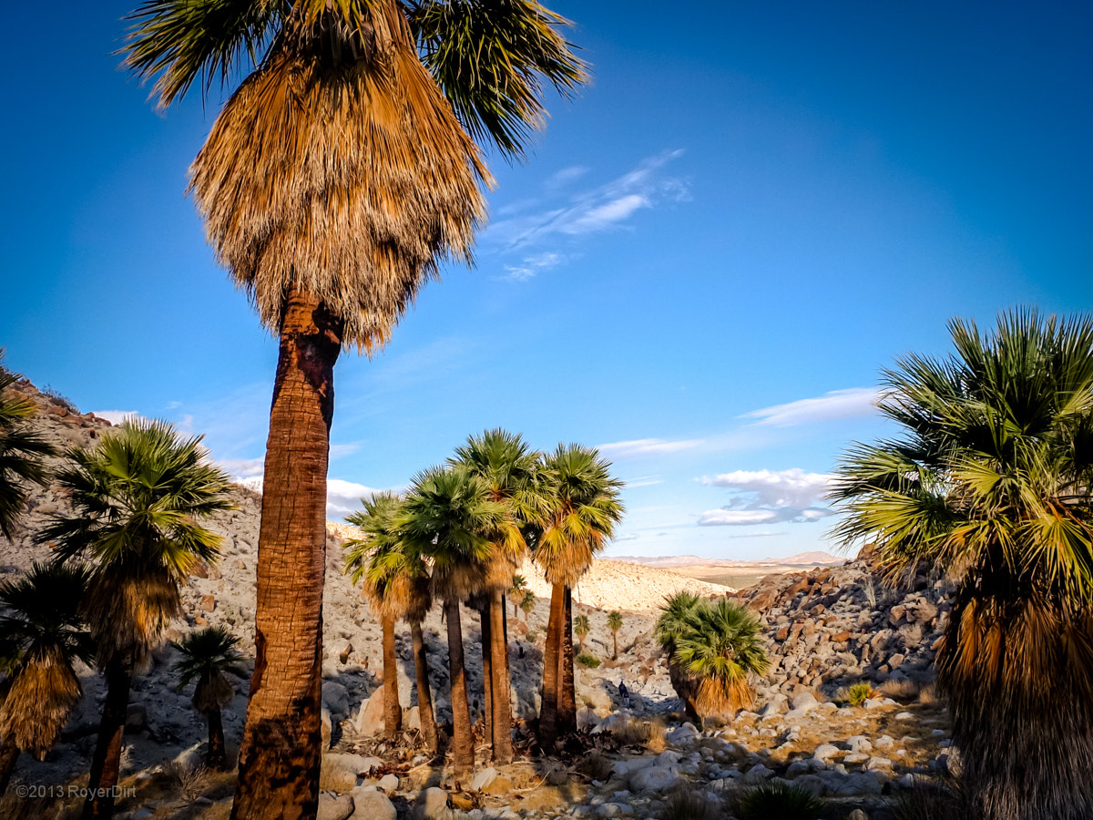 Photograph Pygmy Palms by Royer Dirt on 500px