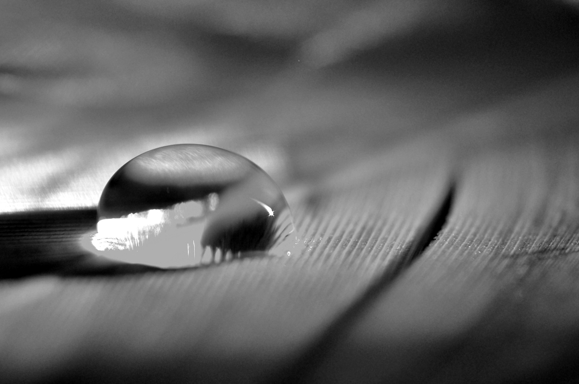 Photograph drop !  by yaser  on 500px