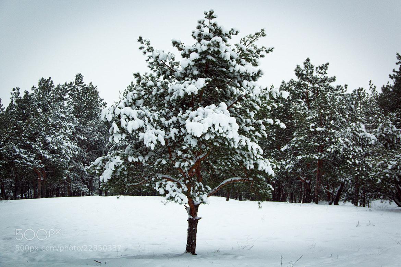 Photograph winter by Jenya Roslakov on 500px