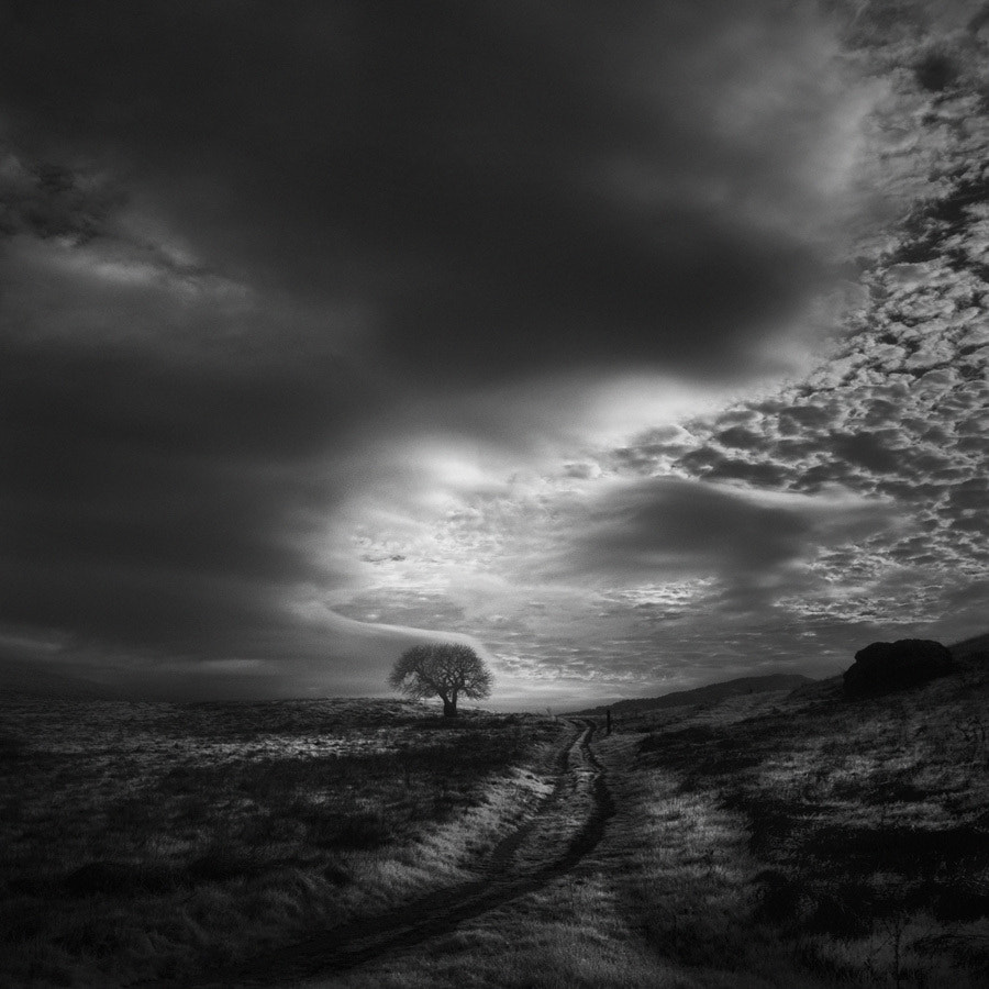 Photograph A Poet's Tree II by Nathan Wirth on 500px