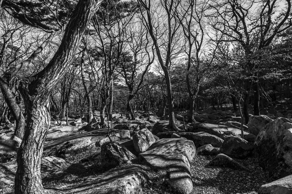 Photograph Monochrome Forest by Tim Grey on 500px