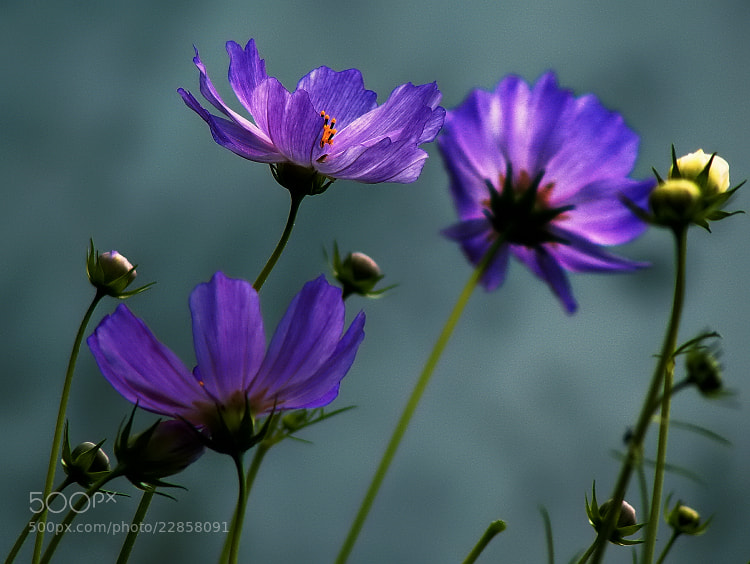 Photograph ծաղիկ by EMERALD WAKE © on 500px
