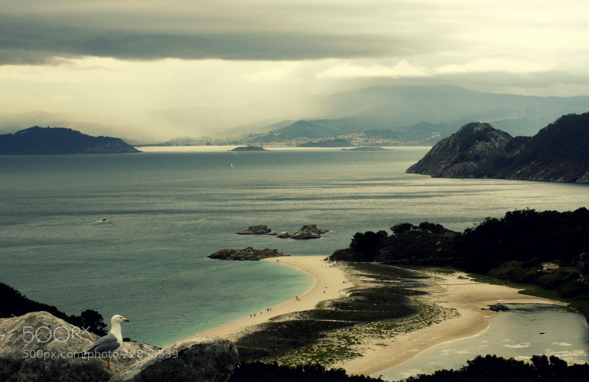 Photograph Seagul in Cies islands paradise by Raquel Camurasiquel on 500px