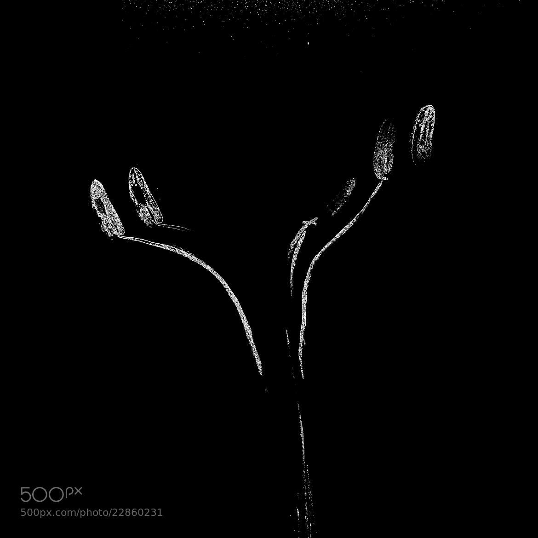Photograph Untitled by marilia gallus on 500px