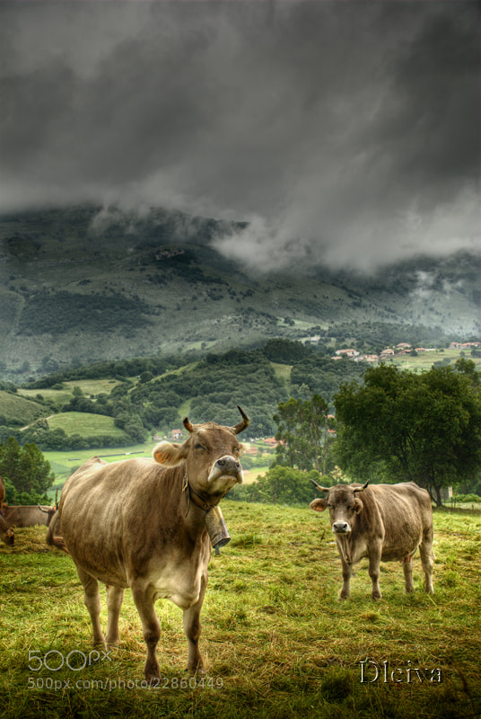 Photograph Valle de Pas (Cantabria, Spain) by Domingo Leiva on 500px