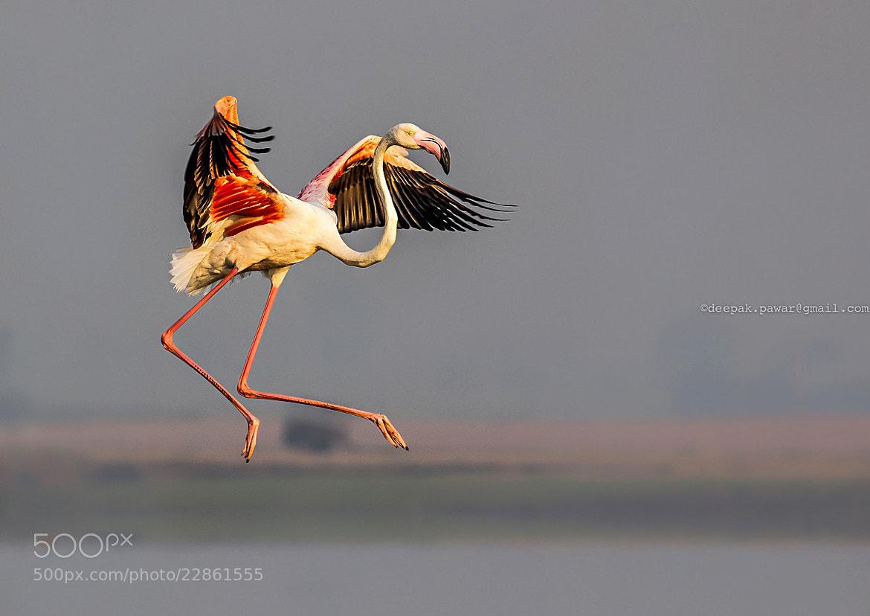 Photograph { Landing gears {S<< by Deepak Pawar on 500px