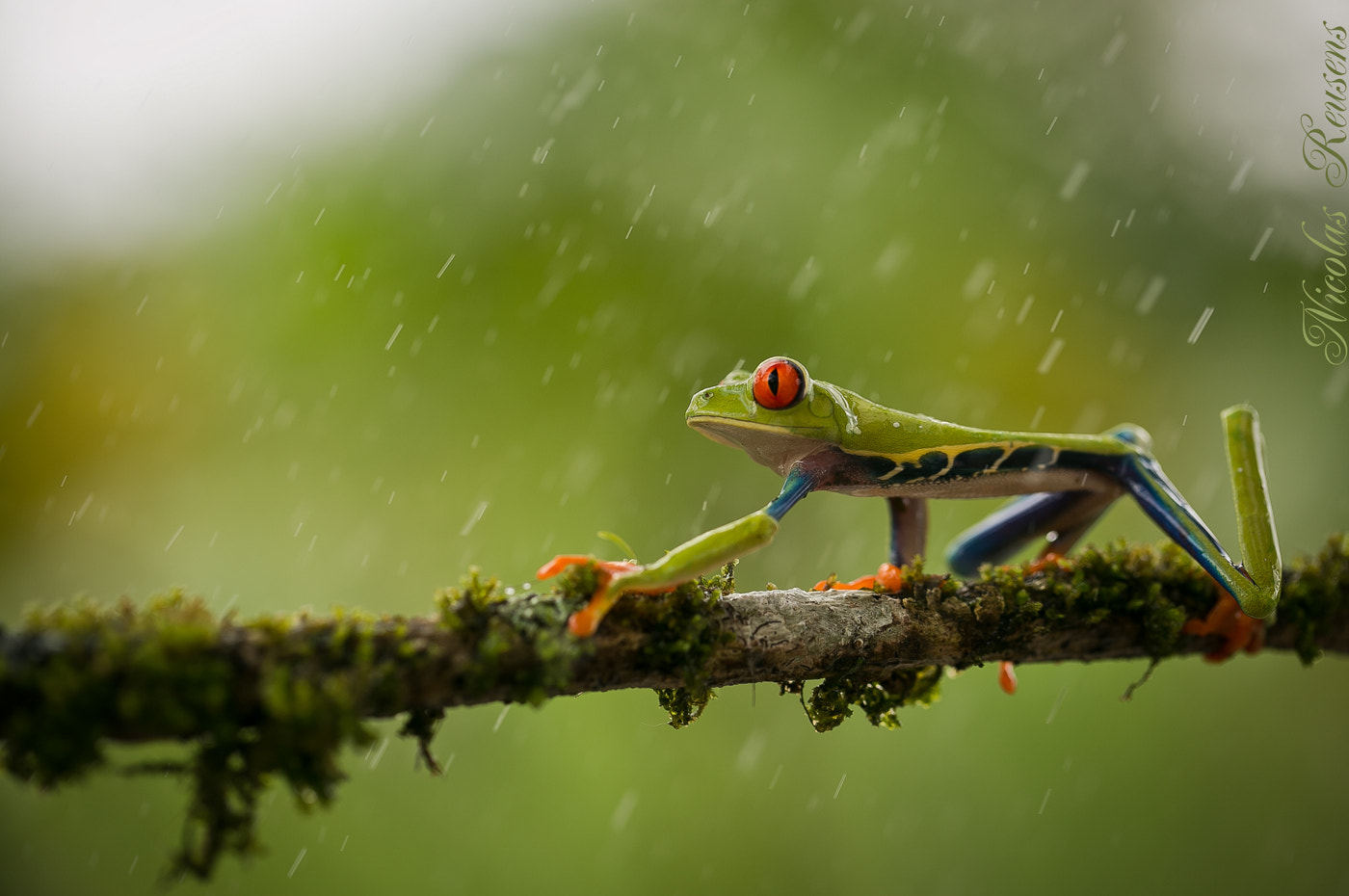 Photograph Froggy rainy day by Nicolas Reusens on 500px