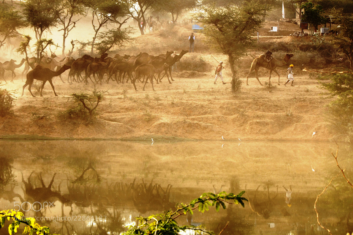 Photograph Camel herders of Rajasthan by udhay krishnamurthy on 500px