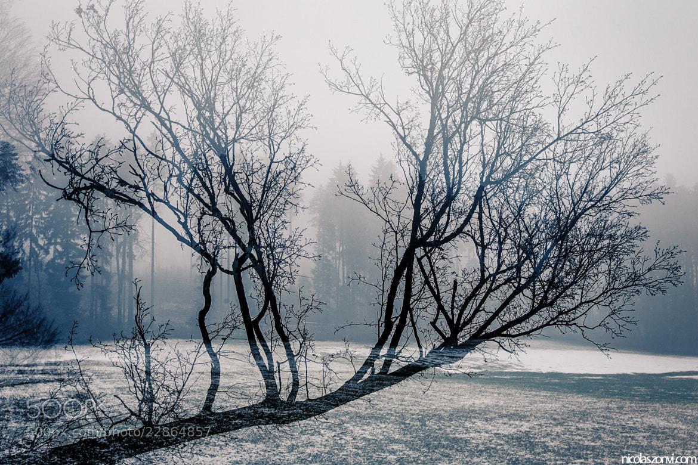 Photograph Untitled by Nicolas Zonvi on 500px