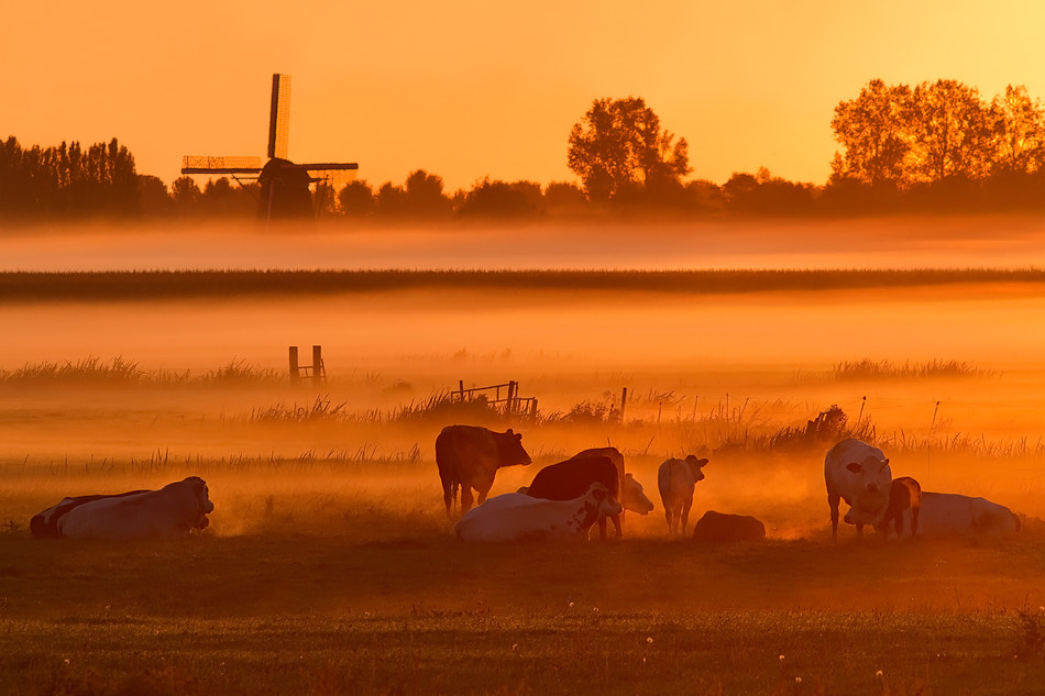 Photograph Dutch Mountains by Roeselien Raimond on 500px