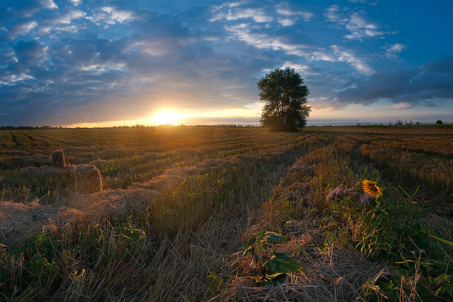 Photograph August field by Dmytro Balkhovitin on 500px