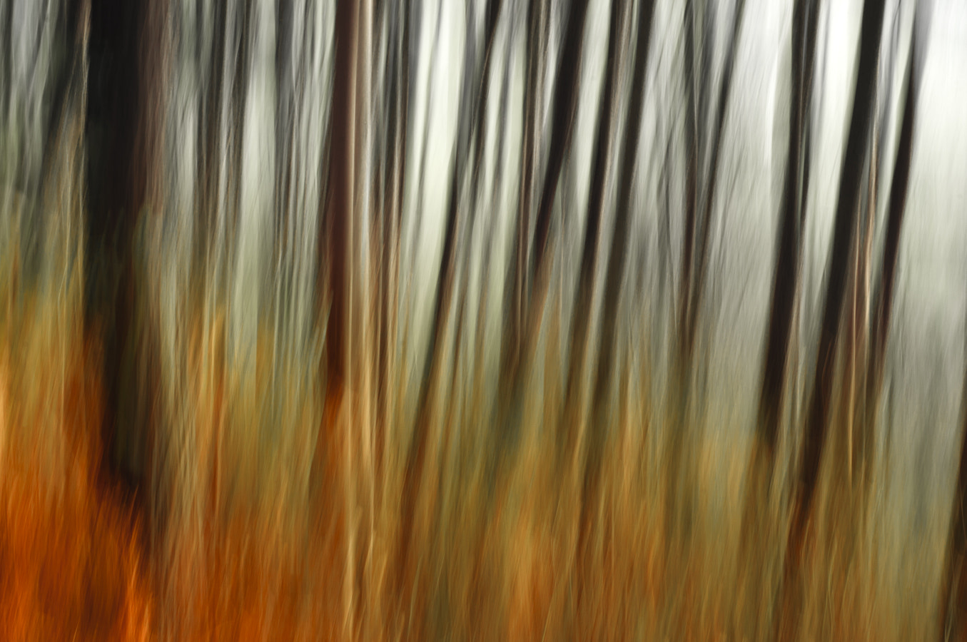 Photograph The abstract Forest: Fire by Saghani  on 500px