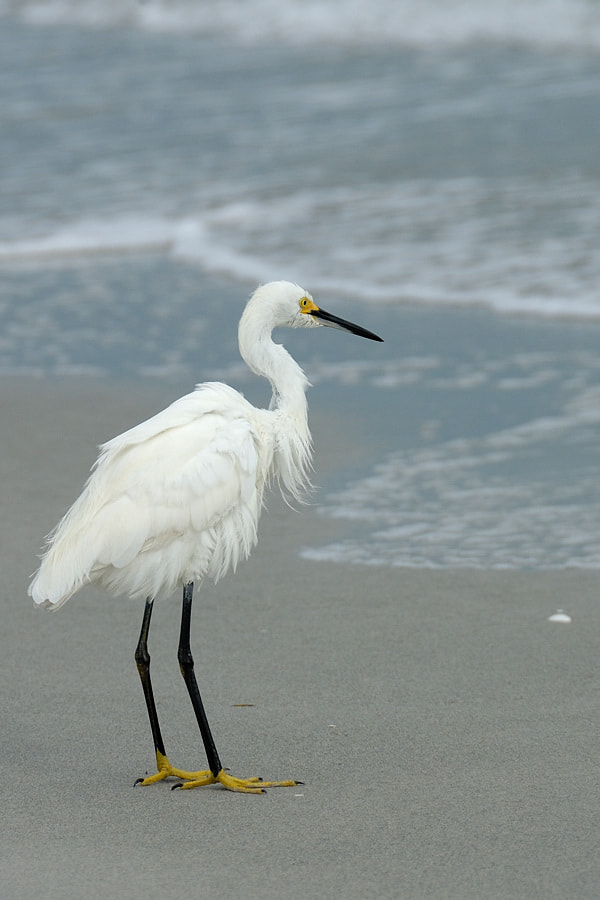 Photograph Bird @ Sanibel island by Jimmy De Taeye on 500px