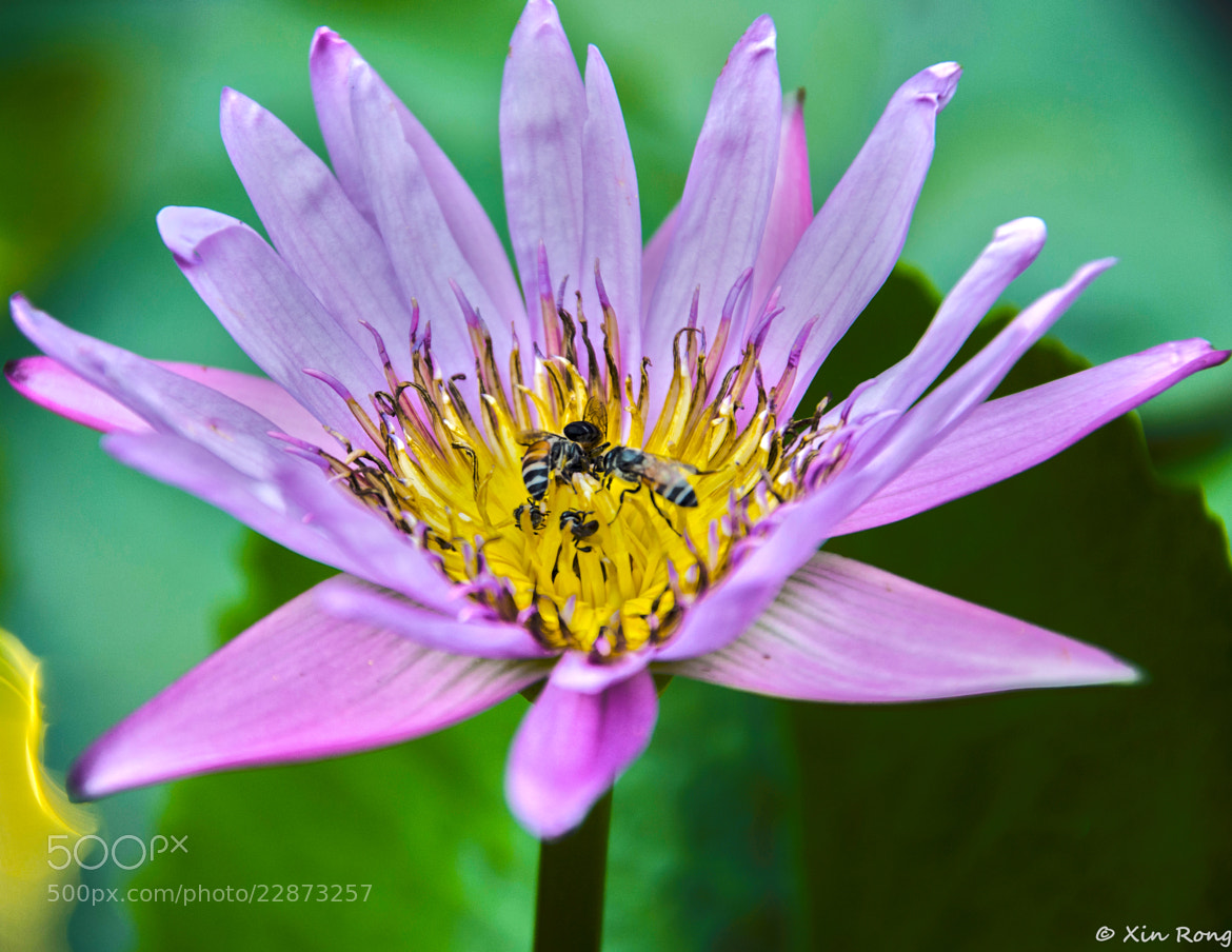Photograph Bees and Flower by Tan Xin Rong on 500px
