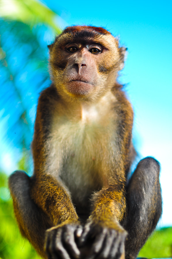 Photograph The Monkey Who Can't Be Moved by Jeric Herrera on 500px