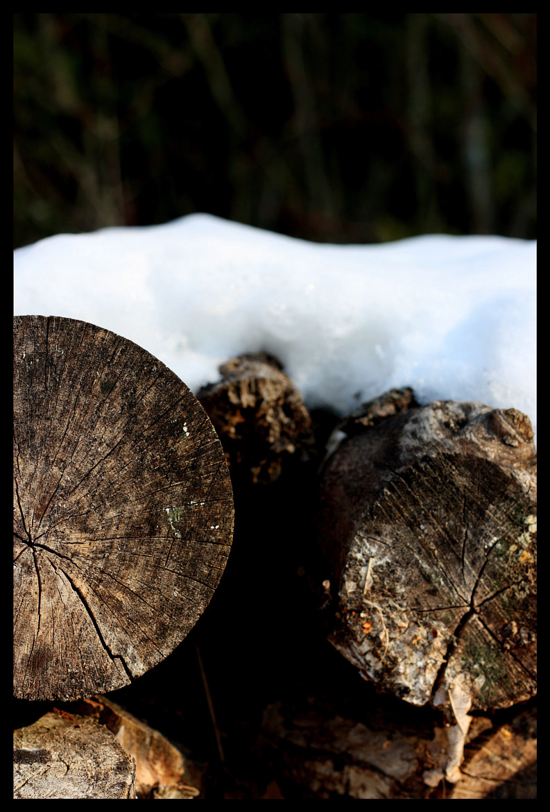 Photograph Wood & Snow by Alexandra Paredes on 500px