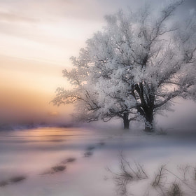Beautiful winter by Maurizio Fecchio (MaurizioRewinds)) on 500px.com