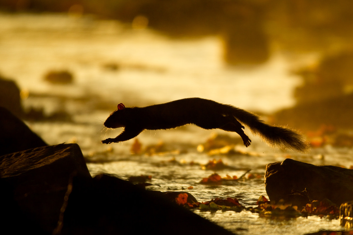 Photograph Squirrel on the rocks by René Visser on 500px