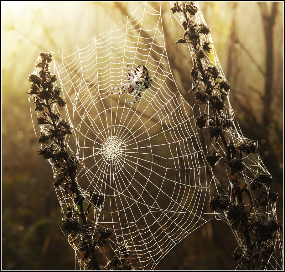 Photograph SpiderNET by Vadim Trunov on 500px
