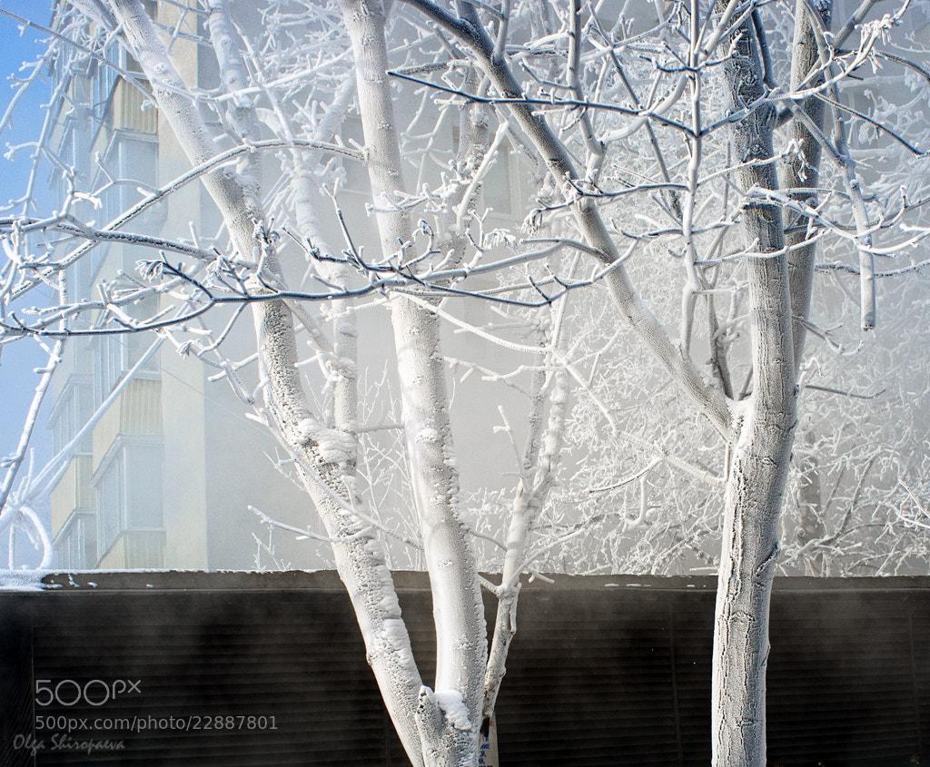 Photograph Winter#8. by Olga Shiropaeva on 500px