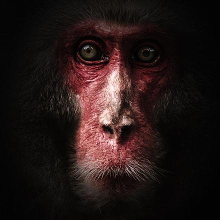 Monkey II