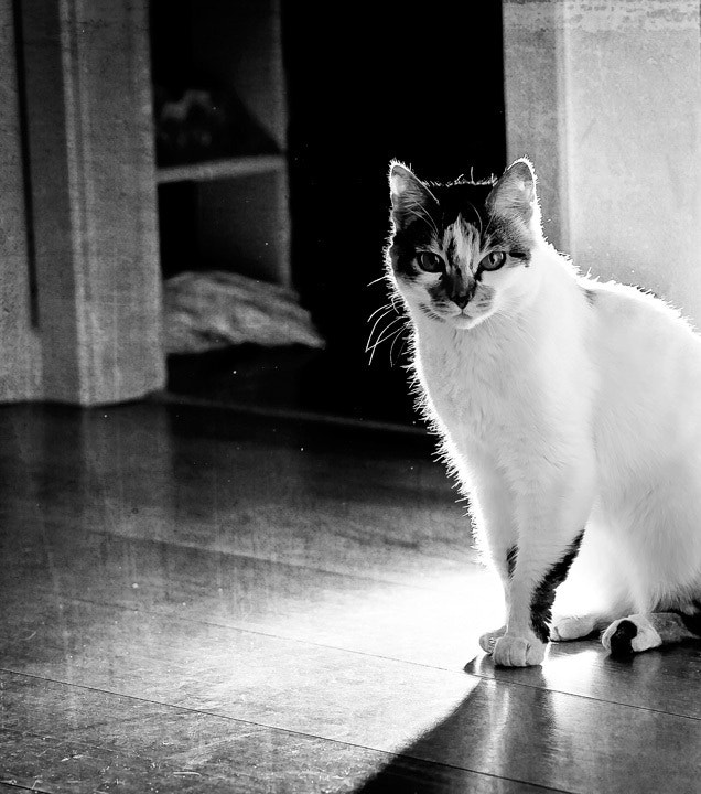 Photograph cleo by Alina Crainic on 500px
