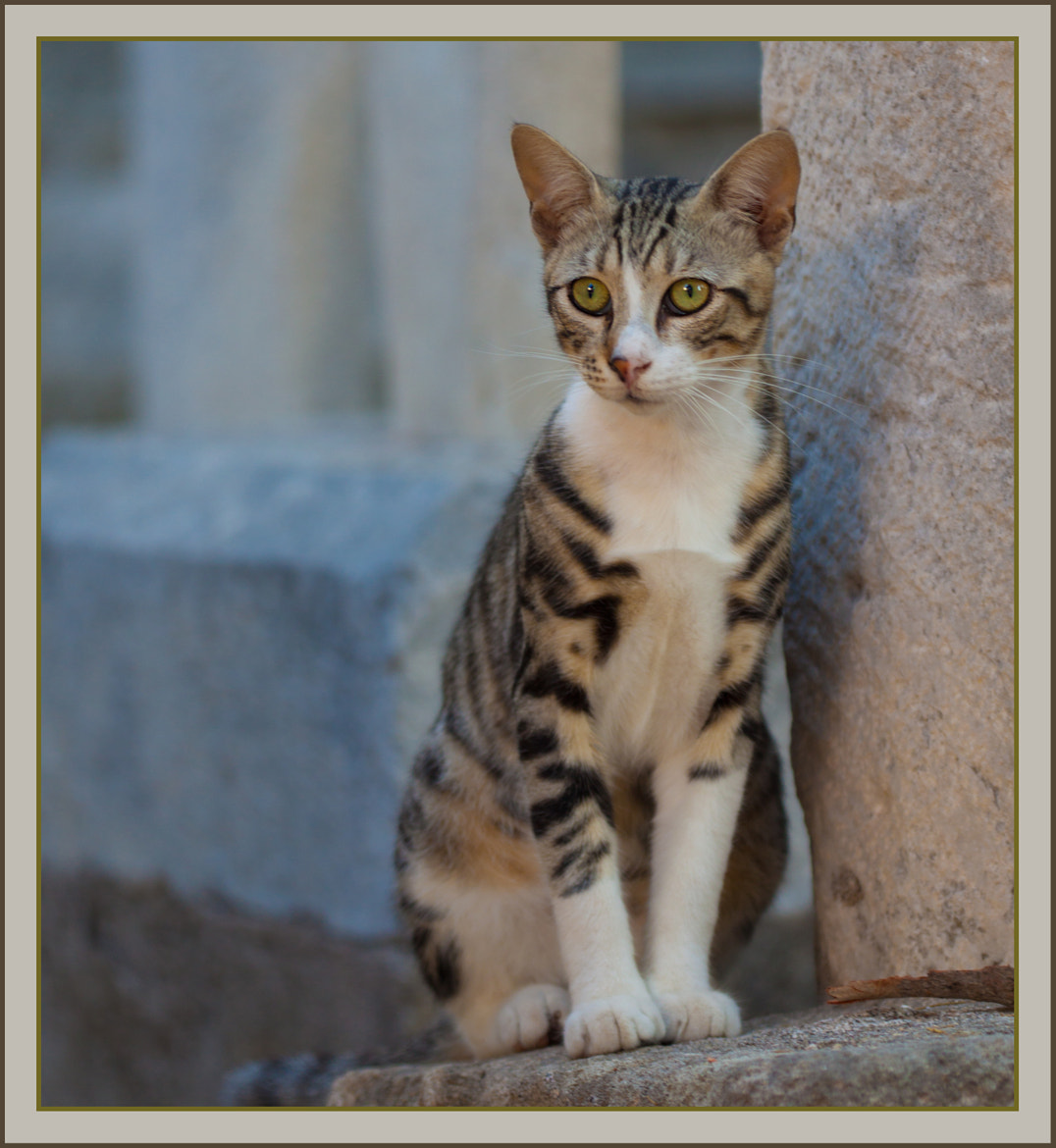 Photograph Cat from Greece by Anne Elisabeth on 500px