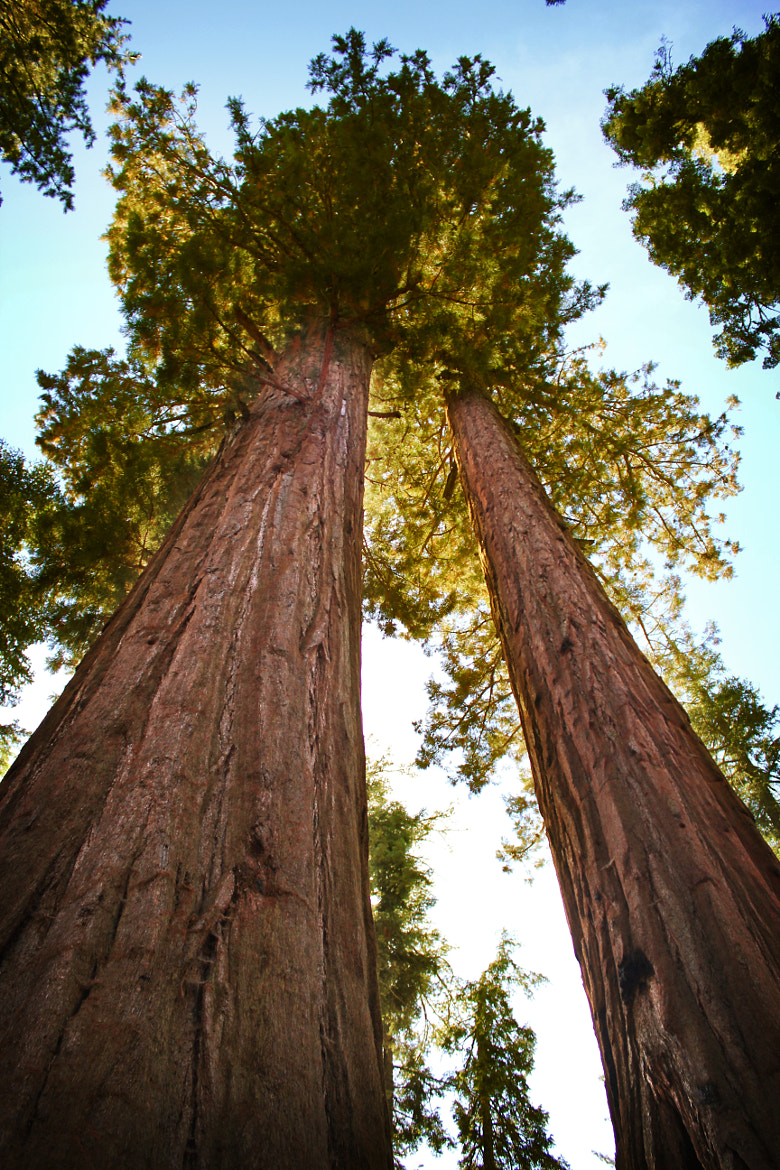 Photograph Sequoia National Monument by Silvia Corradin on 500px