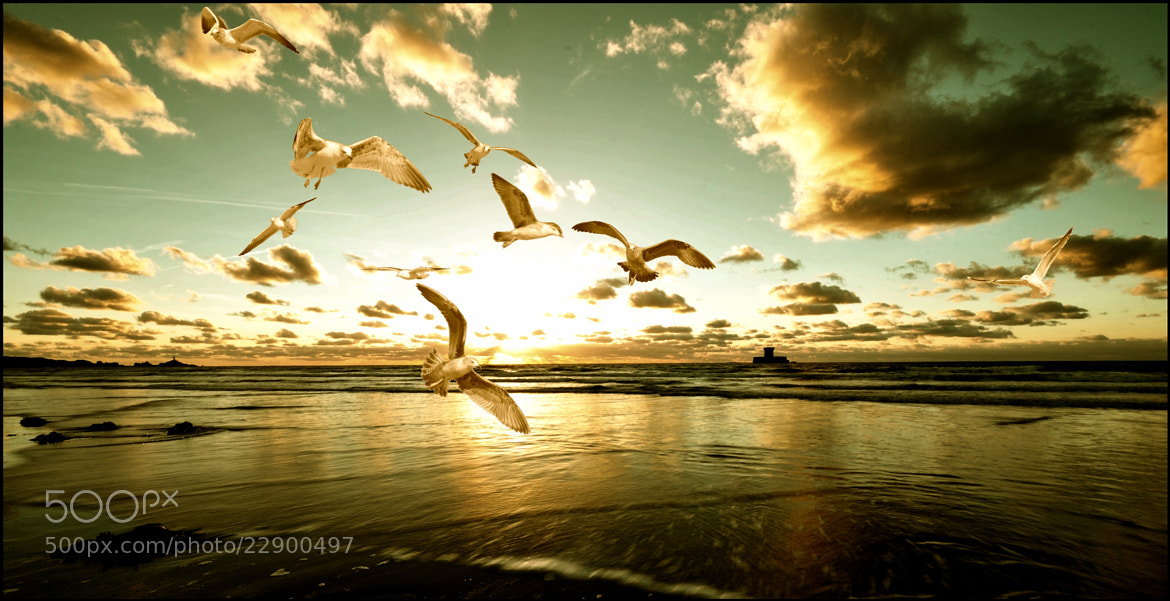 Photograph Late Flight by Ilidio Fernandes on 500px