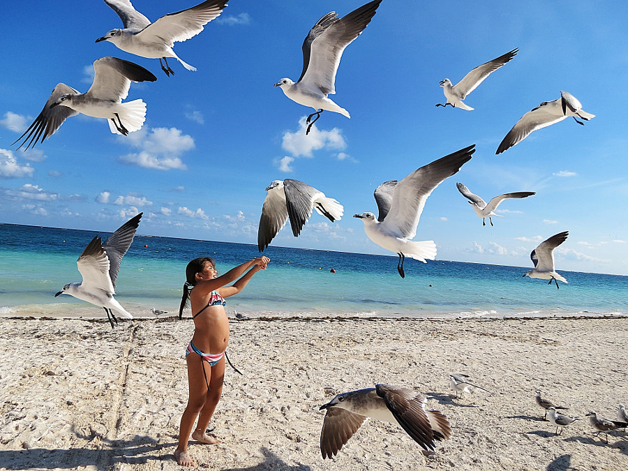 The Girl & the Seagulls
