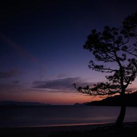 The loving pines