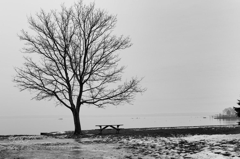 Photograph Morning Oak by David Stebbing on 500px