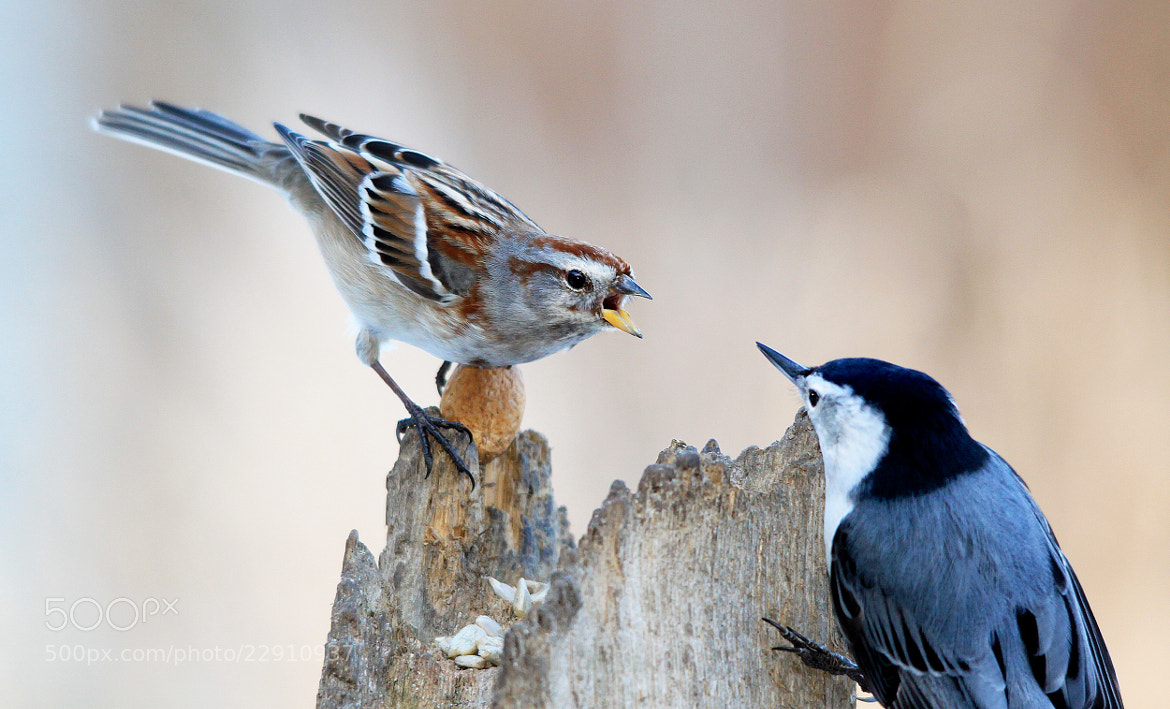 Photograph Confrontation by Brian Masters on 500px