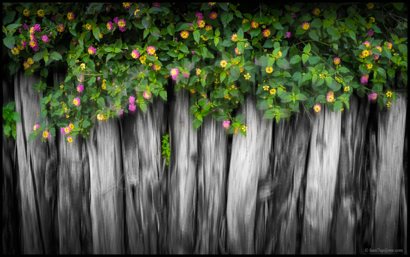 Photograph Fence by Hani Latif Zaloum on 500px