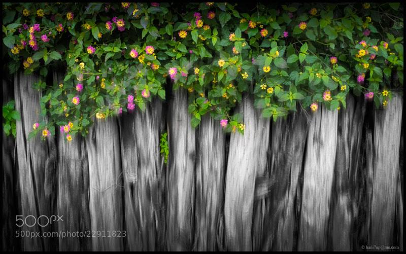 Photograph Fence by Hani Latif Zaloum on 500px