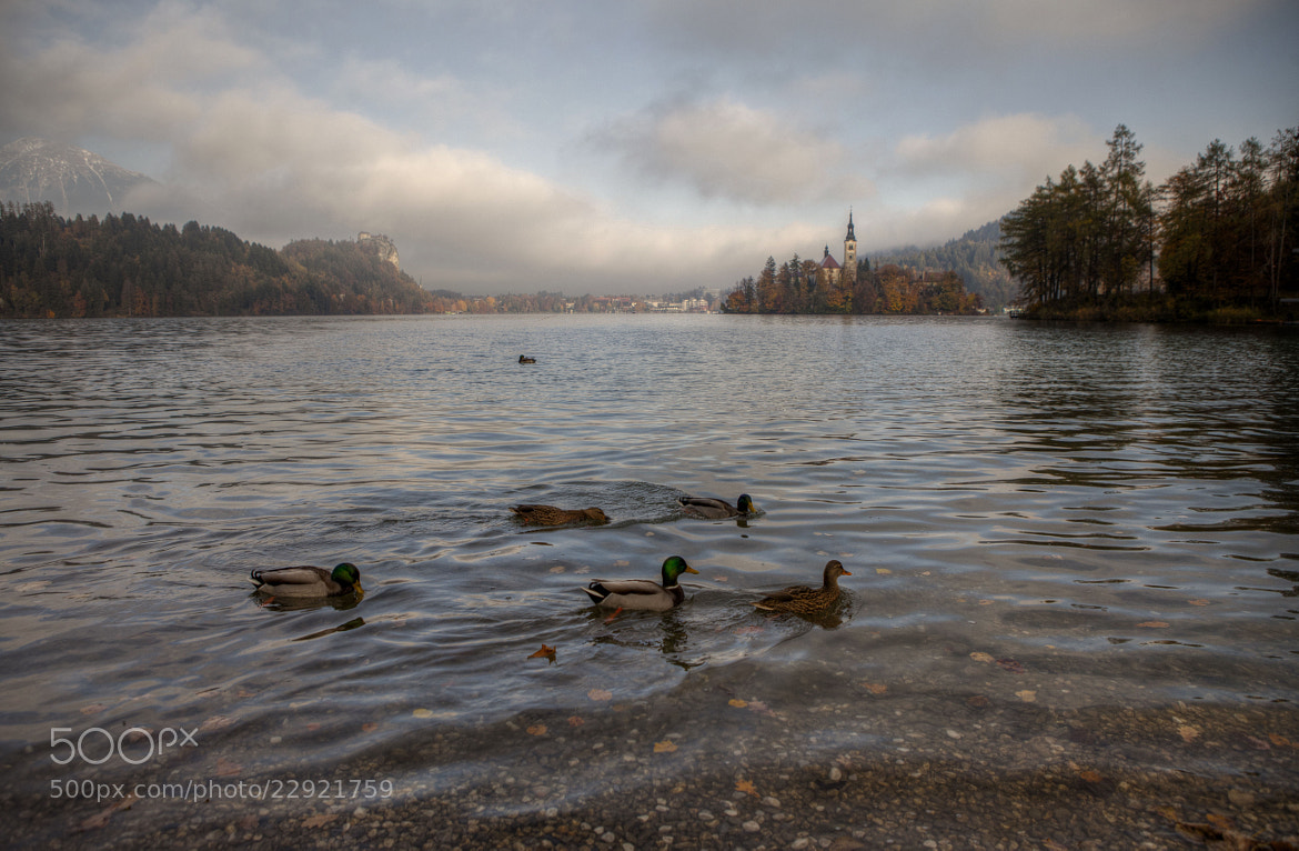 Photograph Morning Swim  by Béla Török on 500px