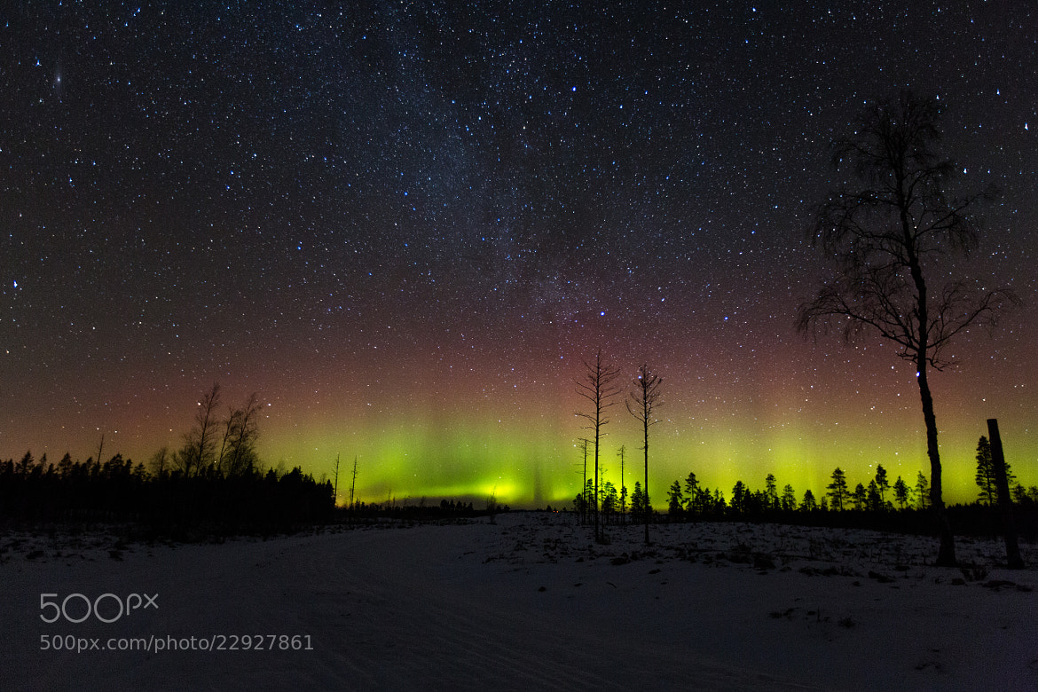 Photograph Aurora by Leigh  Bloomfield on 500px