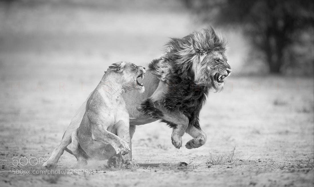Photograph Passion by Marlon du Toit on 500px