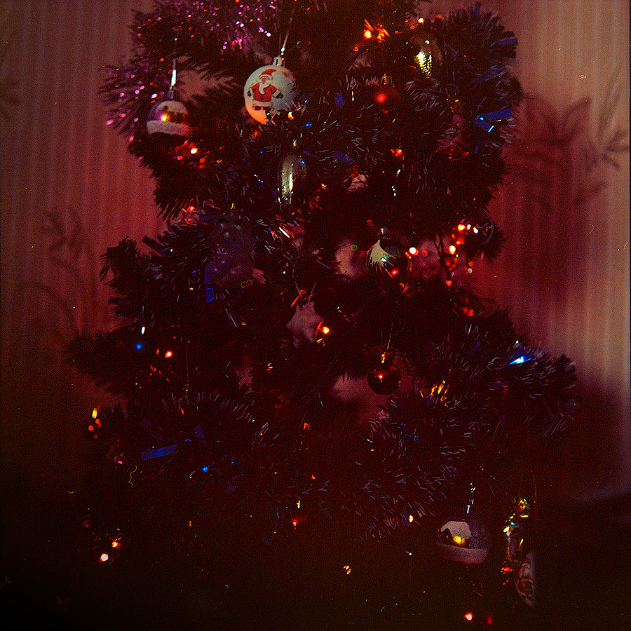 Photograph Christmas tree by Pavel Sinegubov on 500px