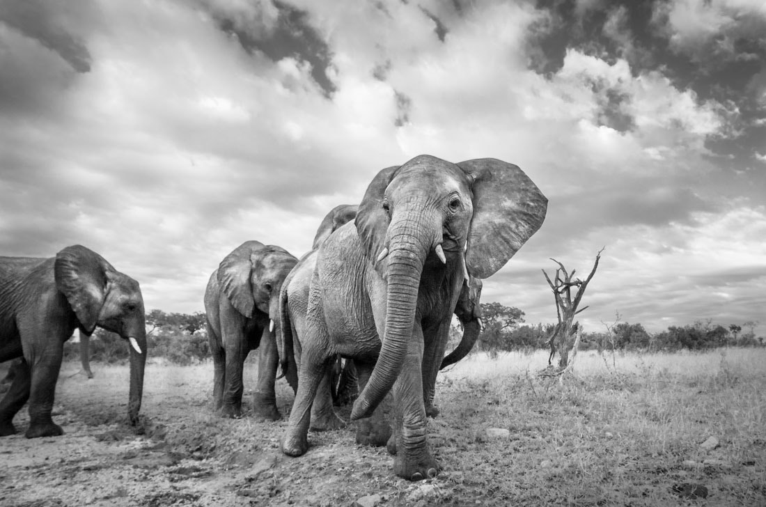 Photograph African Skies by Marlon du Toit on 500px