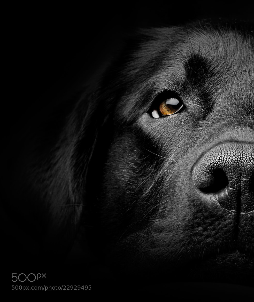 Photograph My Lab by Mikael Sundberg on 500px