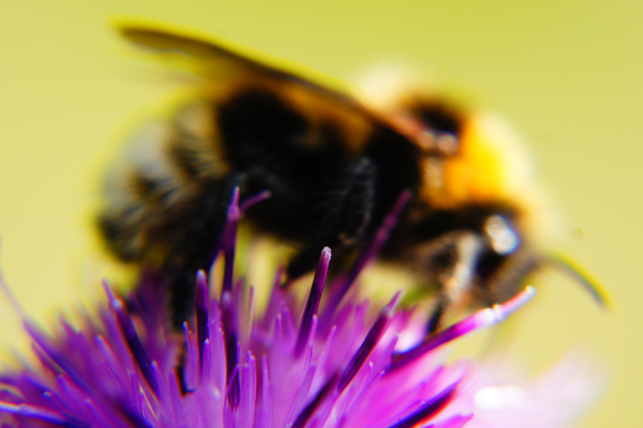 Photograph A Bees Passion by Damian Noga on 500px