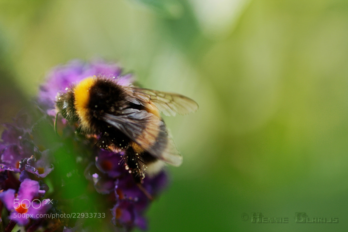 Photograph Beauty and the bee by Hennie Clarijs on 500px
