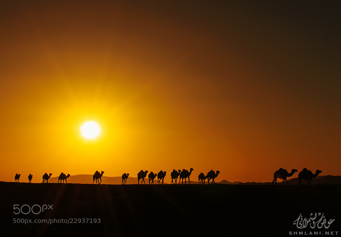Photograph Journey from the horizon by Awadh alshmlani on 500px