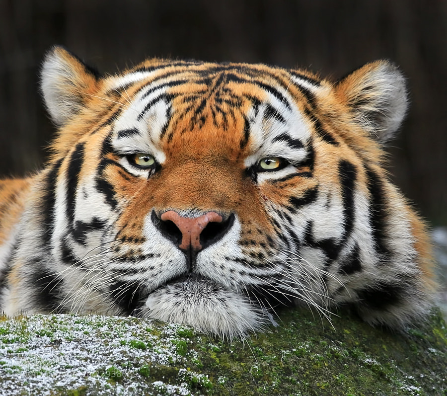 Photograph Intense by Klaus Wiese on 500px